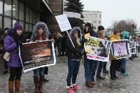 Более 8000 туляков требуют запретить убийство бездомных животных, Фото: 4