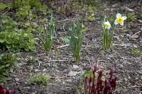 Весна 2020 в Туле: трели птиц и первые цветы, Фото: 33