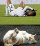 Котик понимает, как Роналдо страдает., Фото: 7