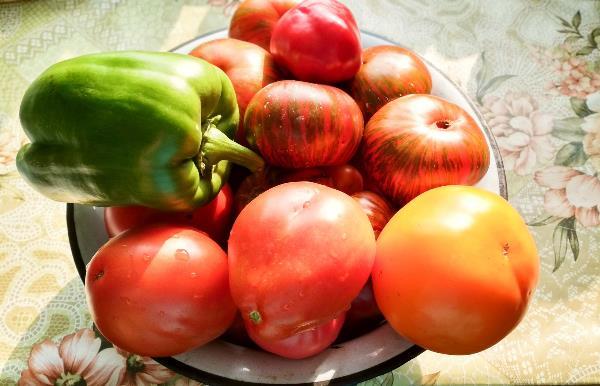 Помидоры, помидоры... Помидоры-овощи