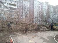 Сильный ветер в Туле повалил деревья, Фото: 2