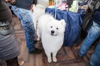 Выставка собак в Туле, 29.11.2015, Фото: 61