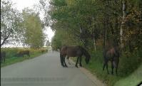 Табун лошадей у Сеженского леса, Фото: 6