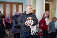 Выставка собак в Туле, 29.11.2015, Фото: 64