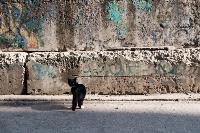 Тульские котики, Фото: 75