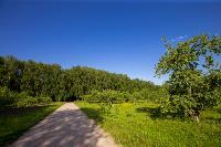 Летний день в Ясной Поляне, Фото: 30