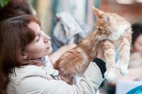 Выставка кошек в МАКСИ, Фото: 28