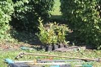 Высадка деревьев и растений ко Дню города, Фото: 8