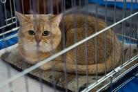 Выставка кошек в ГКЗ. 26 марта 2016 года, Фото: 32