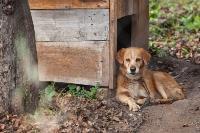 Дворняги, дворяне, двор-терьеры: 50 фото самых потрясающих уличных собак, Фото: 17