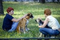 В Центральном парке Тулы проходит фестиваль помощи животным, Фото: 22