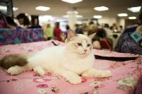 """Выставка """"Пряничные кошки"""". 15-16 августа 2015 года., Фото: 137"""