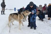 Праздник северных собак на Куликовом поле , Фото: 16