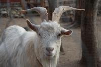 Куда свозить детей посмотреть на животных в 100 км от Тулы: обзор, Фото: 7