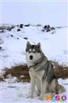 Куликово поле. Гонки на собачьих упряжках., Фото: 58