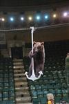 Новая программа в тульском цирке, Фото: 16
