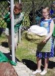 Фестиваль детского творчества «Курочка Ряба». 14 мая 2016 года, Фото: 6