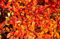 Золотая осень в Туле-2019, Фото: 122