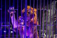 Шоу фонтанов «13 месяцев» в Тульском цирке – подарите себе и близким путевку в сказку!, Фото: 82