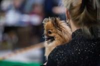 Выставка собак в Туле, Фото: 50