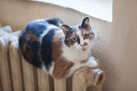 Тульские котики, Фото: 40