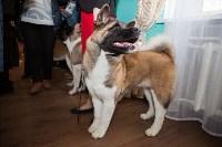 Выставка собак в Туле, 29.11.2015, Фото: 75