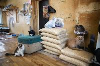 Волонтеры спасли кошек из адской квартиры, Фото: 31