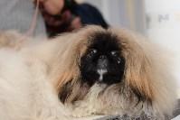 """Выставки собак в ДК """"Косогорец"""", Фото: 25"""