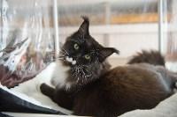 Выставка кошек в ГКЗ. 26 марта 2016 года, Фото: 84