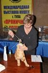 В Туле прошла международная выставка кошек, Фото: 67