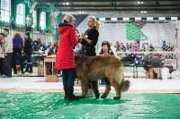 Выставка собак в Туле, Фото: 8