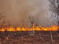 В Федоровке огонь с горящего поля едва не перекинулся на дома, Фото: 5