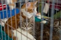 Выставка кошек в ГКЗ. 26 марта 2016 года, Фото: 44