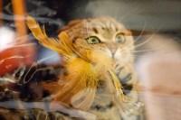 Выставка кошек. 4 и 5 апреля 2015 года в ГКЗ., Фото: 59