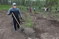 Высадка молодого леса, Фото: 39