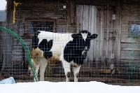 Фермерское хозяйство Людмилы Коробовой, Фото: 13