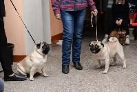 """Выставки собак в ДК """"Косогорец"""", Фото: 66"""