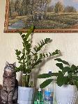 Тульские коты, которых достали хозяева на самоизоляции, Фото: 11