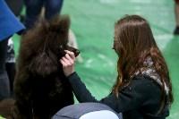 Выставка собак в Туле 14.04.19, Фото: 52