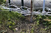 Бродячие собаки погубили рассаду тулячки и довели ее до сердечного приступа, Фото: 8