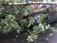 Дерево упало на авто, Фото: 4