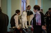 Выставка собак в Туле, 29.11.2015, Фото: 8