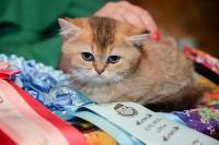 Выставка кошек в Искре, Фото: 83