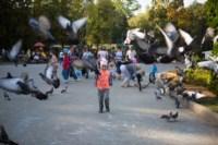 День города - 2014 в Центральном парке, Фото: 115