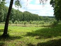 И здесь яблоневый сад обновился,будут новые сорта), Фото: 56