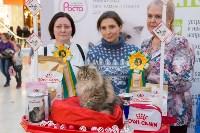 Выставка кошек в Туле, Фото: 89