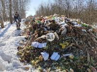 Под Тулой неизвестные сбросили в лесополосе несколько тонн гнилых овощей, Фото: 11