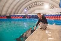 Дельфины, Фото: 5