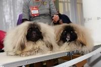 """Выставки собак в ДК """"Косогорец"""", Фото: 27"""