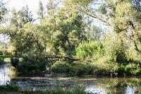 В Баташевском саду из-за непогоды упали вековые деревья, Фото: 3
